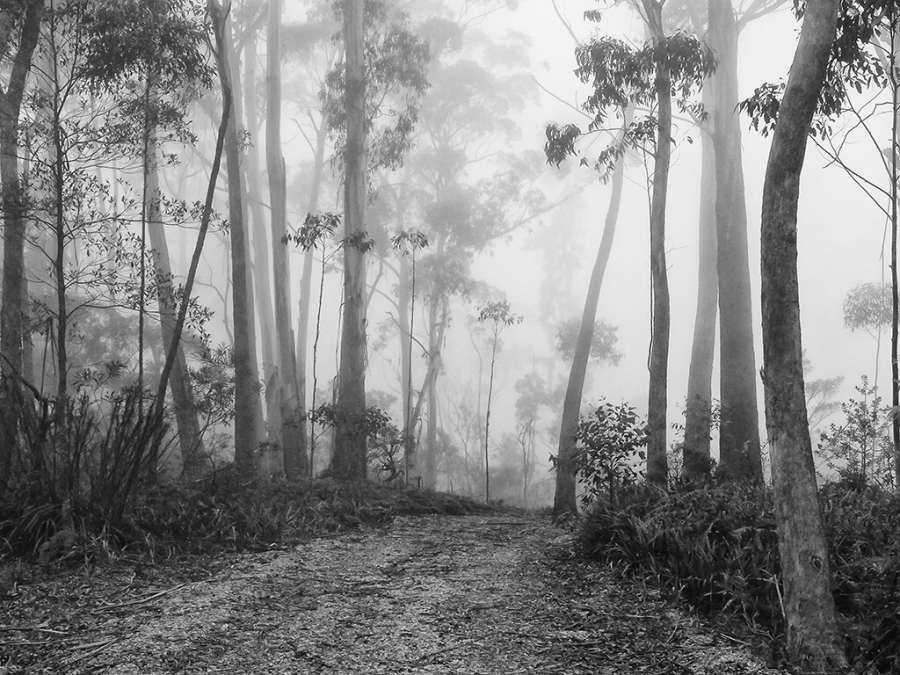 GEOFF SMITH: Misty view, Medium: Digital photograph