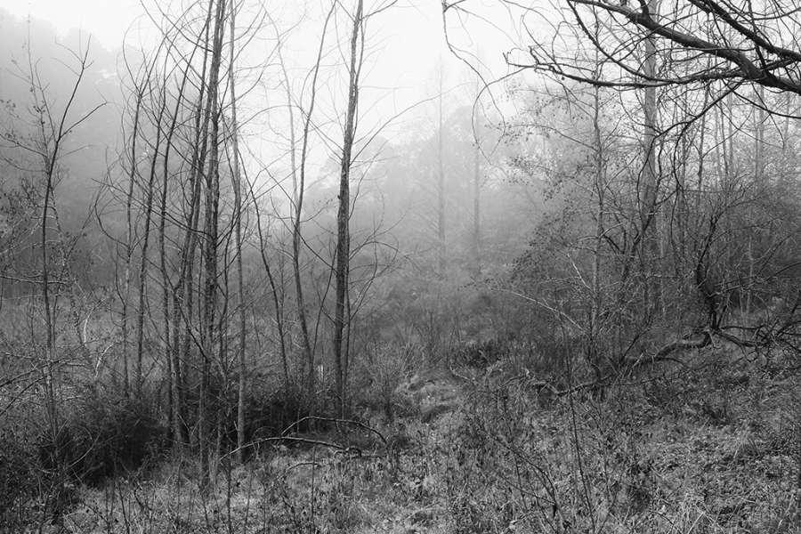 GEOFF SMITH: Winter-bare trees Medium: Digital photograph