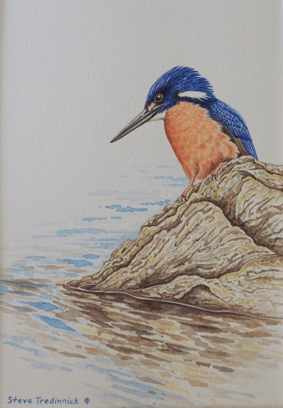 "STEVE TREDINNICK: ""River Jewel"" - Azure Kingfisher 20 x 30 cm Watercolour 2017"