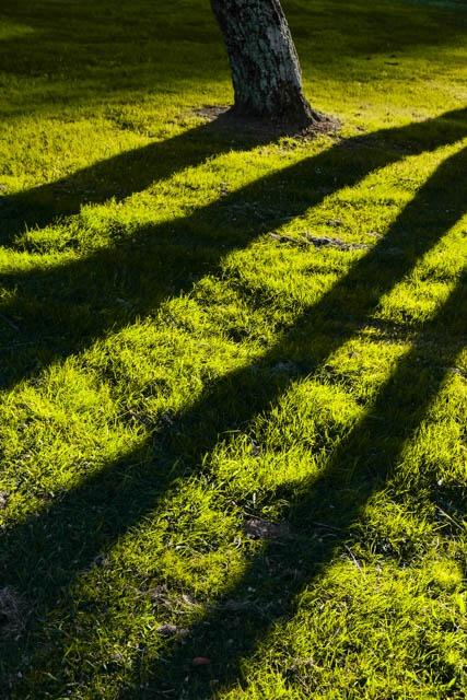 Denis Gallagher: Green Stripe, Photograph