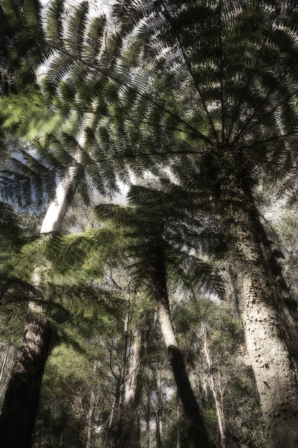 Denis Gallagher: Cathedral of Ferns, Photograph