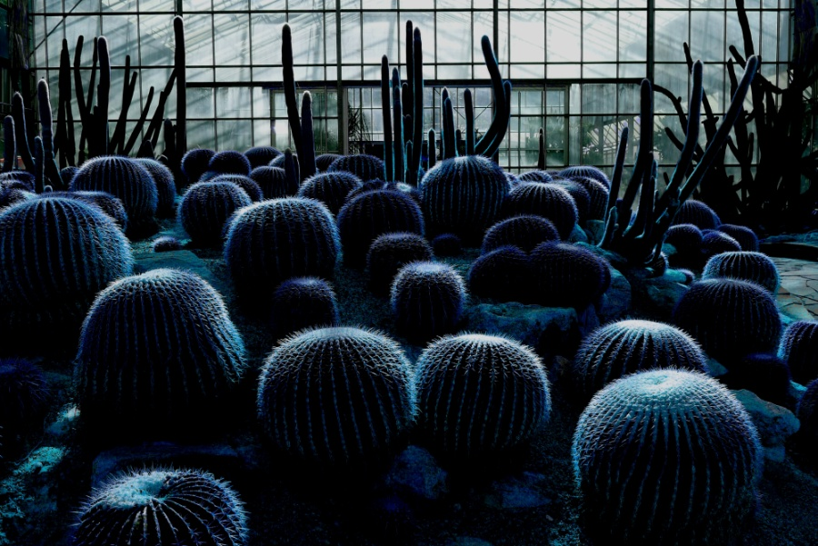 Thierry Ollivain: Nuit Americaine   Photograph