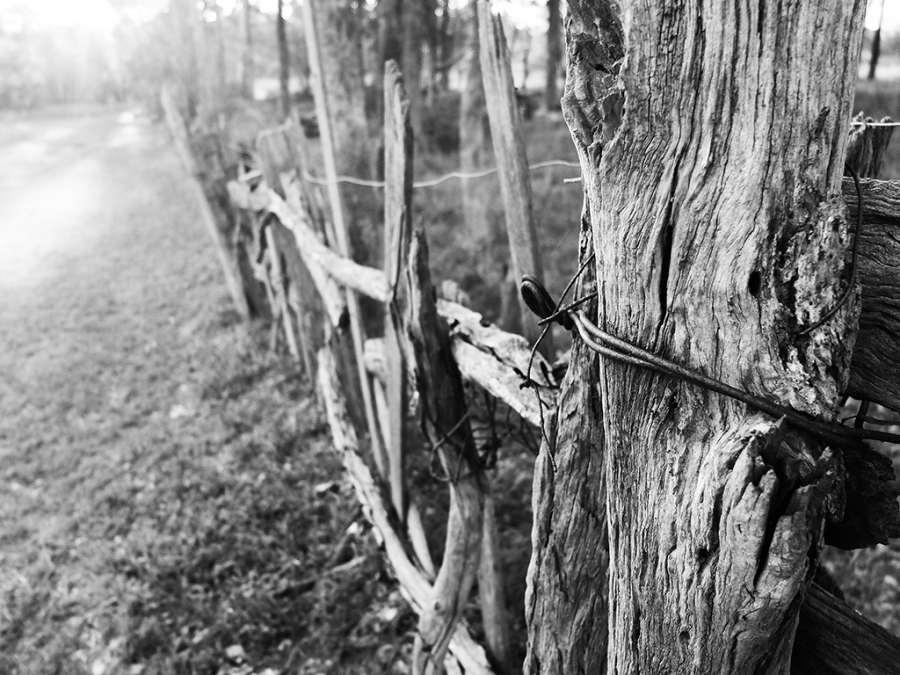 GEOFF SMITH: Don't Fence Me In Medium: Digital photograph
