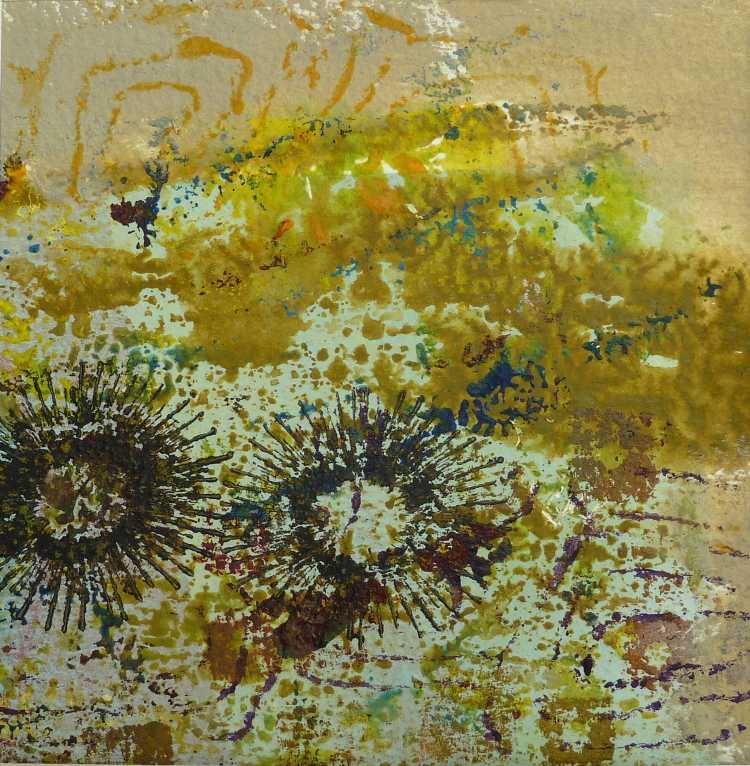 GILLIAN HAND: BANKSIAS Medium: Acrylic painting Size: 30cm x 30cm 2013