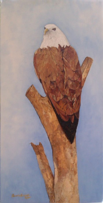 BEVERLEY TAYLOR: Brahminy Kite Medium: Tree Bark Art Size: 35cm x 70 cm 2012