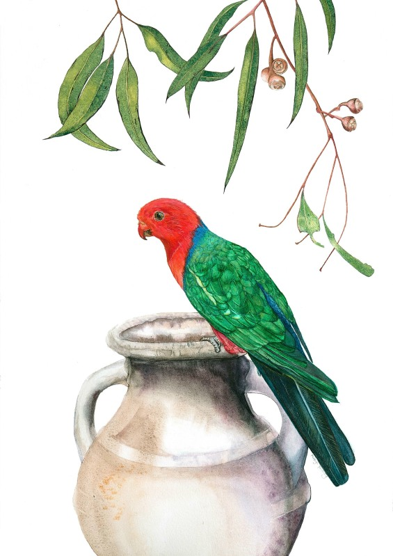 Robyn Fenning: King Parrot on Urn with Eucalyptus branch 70 x 42 watercolour 2017