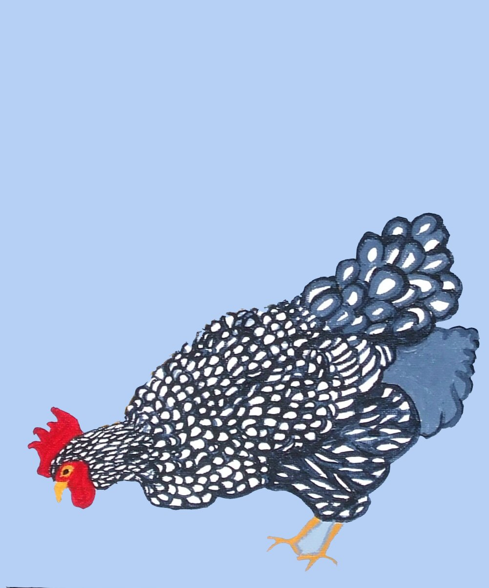 Jeanne Rudd: Splendid Chook, reworked print from Acrylic original 18 x 24cm