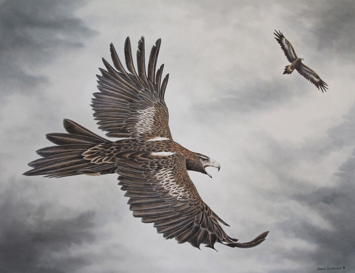 "STEVE TREDINNICK: ""The Calling"" - Wedge-tailed Eagles 85 x 65 cm Watercolour 2010"