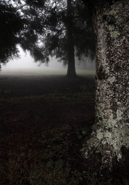Denis Gallager: Dark Tree, Photograph