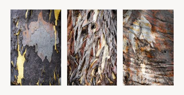 Denis Gallagher: Bark, Photograph