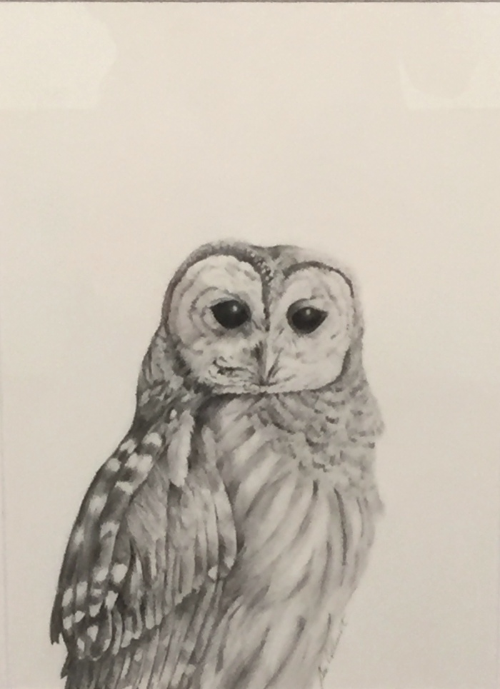 Sue Colburt: Owl Portrait. Graphite