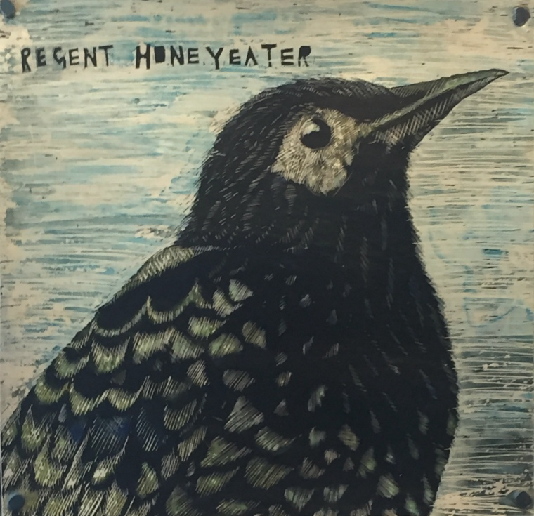 Julie Patterson: Regent Honey eater. Scraperboard