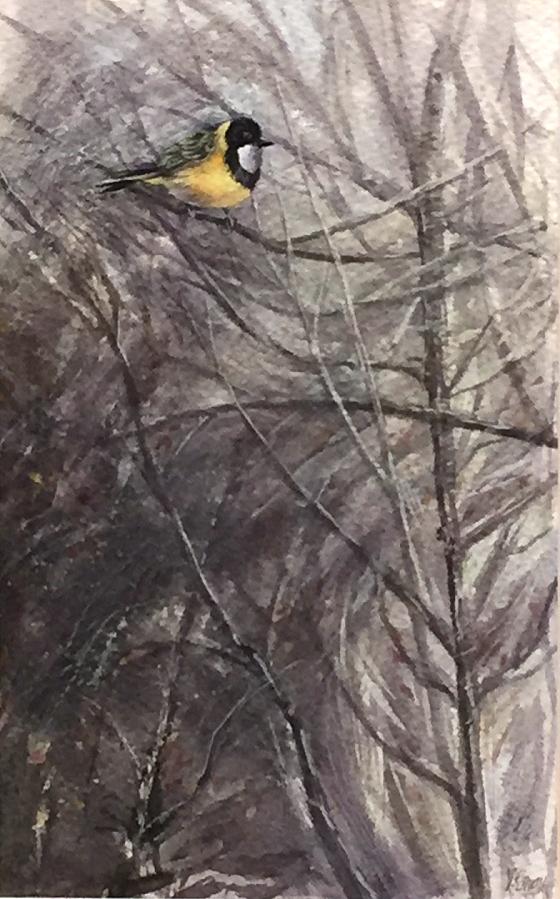 VIRGINIA GRAY:  Golden Whistler.  Watercolour